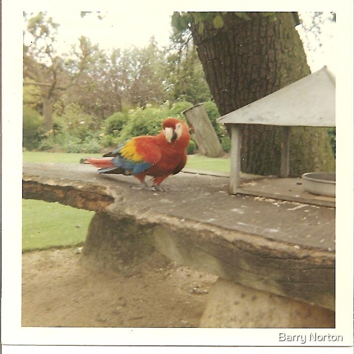 Macaw by Barry Norton