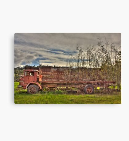 Rooted to the Spot Canvas Print