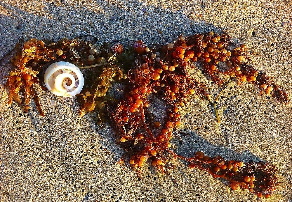 Shell & Seaweed by pedroski