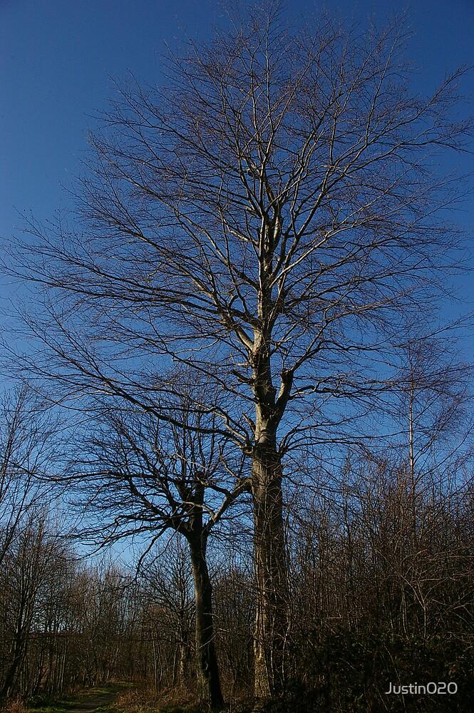 Mr blue sky tree by Justin020
