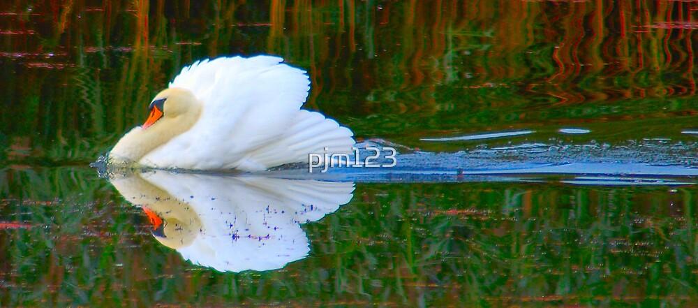 Cupids Arrow by pjm123