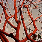 Twisting Branches by Julie Marks