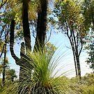 """""""Grass Trees""""  by Nathan  Johnson"""