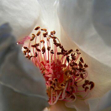 Inner Sanctum White by BecsPerspective