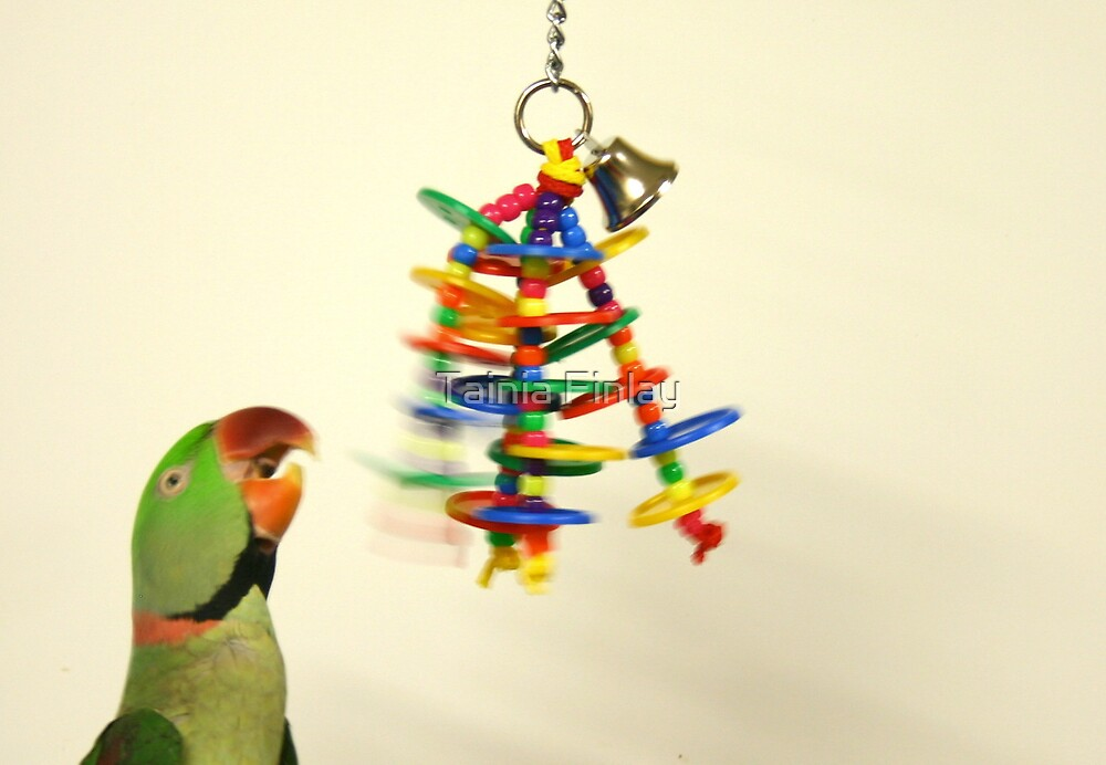 Parrot at play by Tainia Finlay
