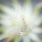 tiny explosions by Natalia Campbell