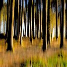 Forest of Dreams by SWEEPER