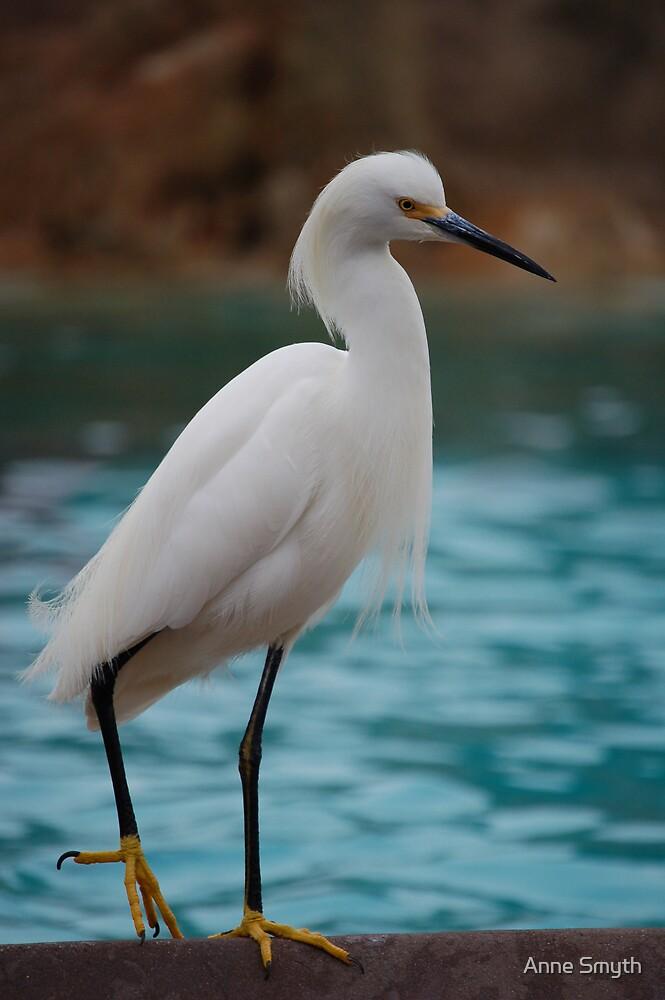 Egret by Anne Smyth