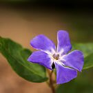 Periwinkle by JEZ22