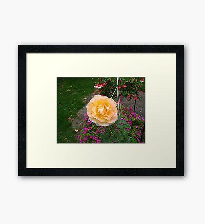 ROSE.. Framed Print
