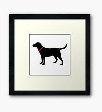 Labrador Retriever, Black Lab Framed Print