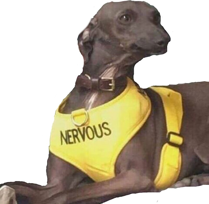 Studio Dog Reviews