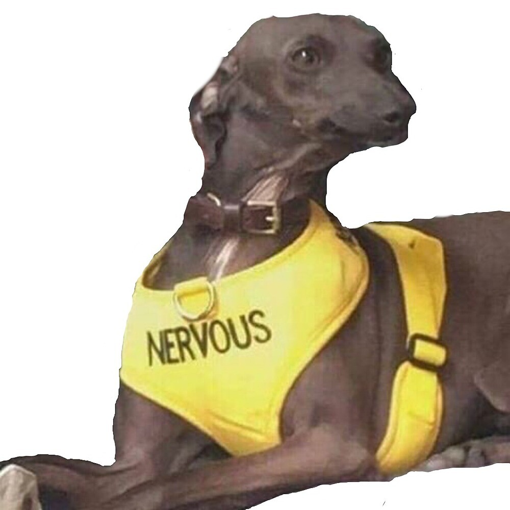 Quot Nervous Dog Quot By Sageanderss Redbubble