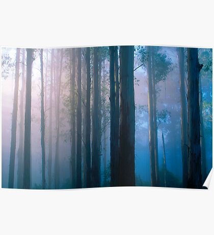 Forest Sunrise Poster