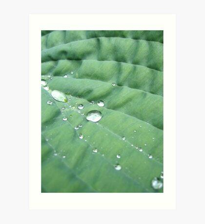 Leaf Diamonds Art Print