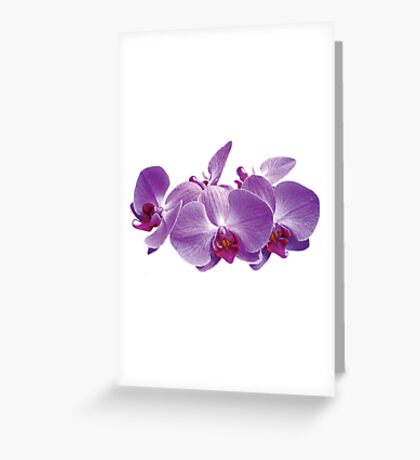 Purple Orchid Trio Greeting Card