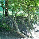 my sons tree by cynthia harper