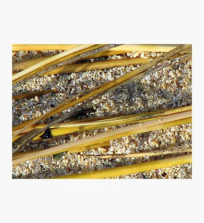Beach Bamboo Photographic Print