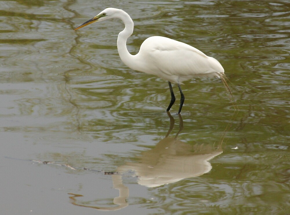 Egret by Jim Caldwell