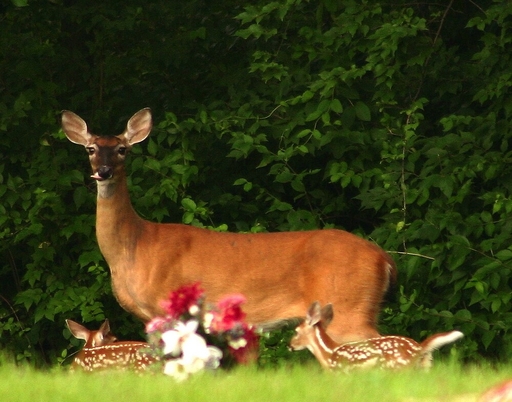 Mom and Twins by Jim Caldwell