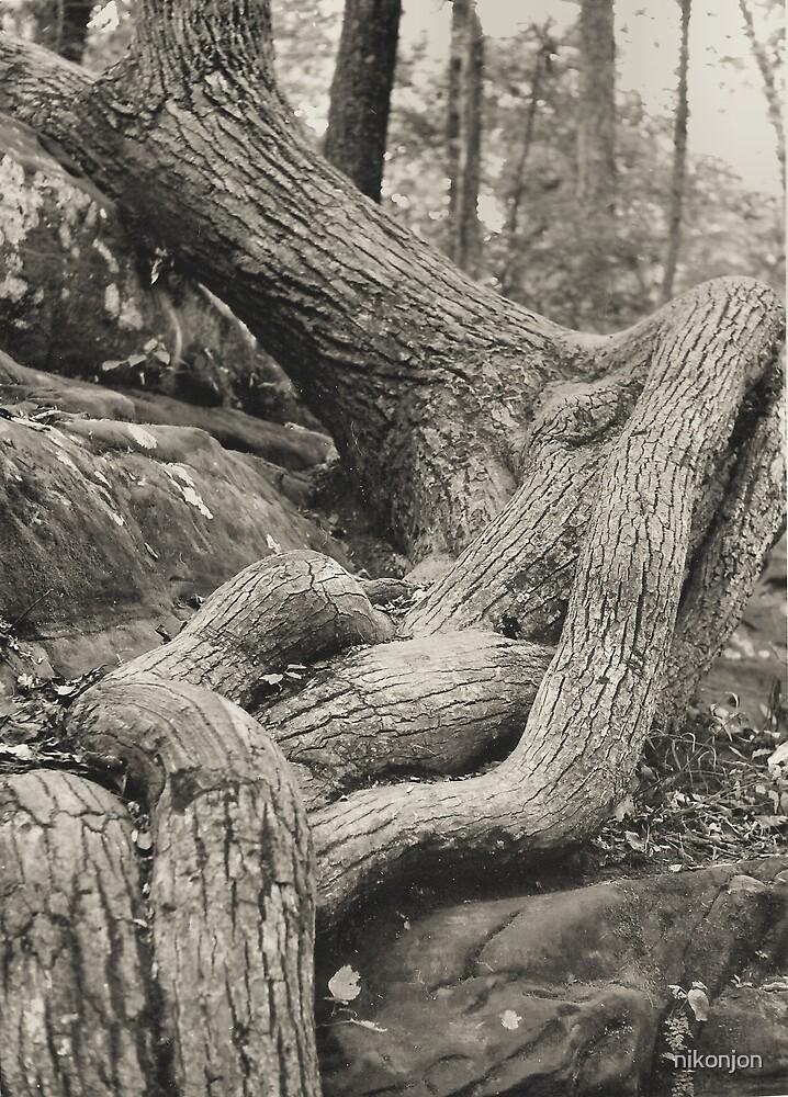 Embracing the Stone by nikonjon