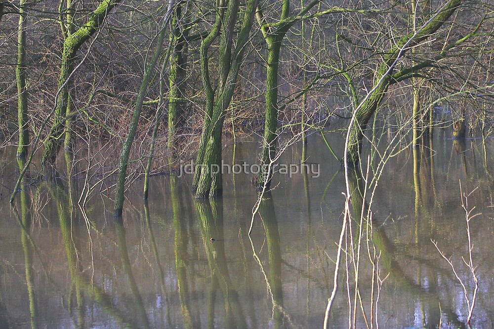 Flooded Woodland Makes a Cool Mirror Image  by jdmphotography