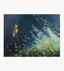Meadowlark Music Photographic Print