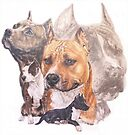 American  Pit Bull Terrier w/Ghost by BarbBarcikKeith