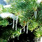 Icicles by Missy