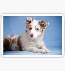 Cute border collie puppy Sticker