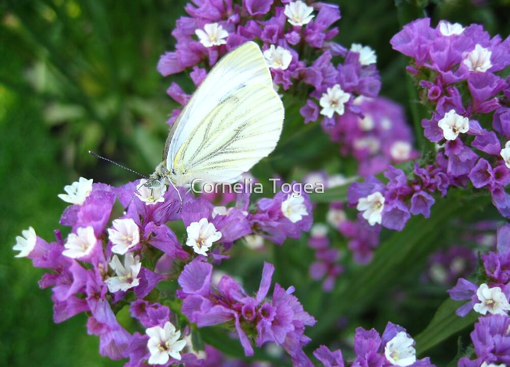 purple, white and green by Cornelia Togea