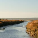 Mouth of Pinole Creek by Chris Clarke