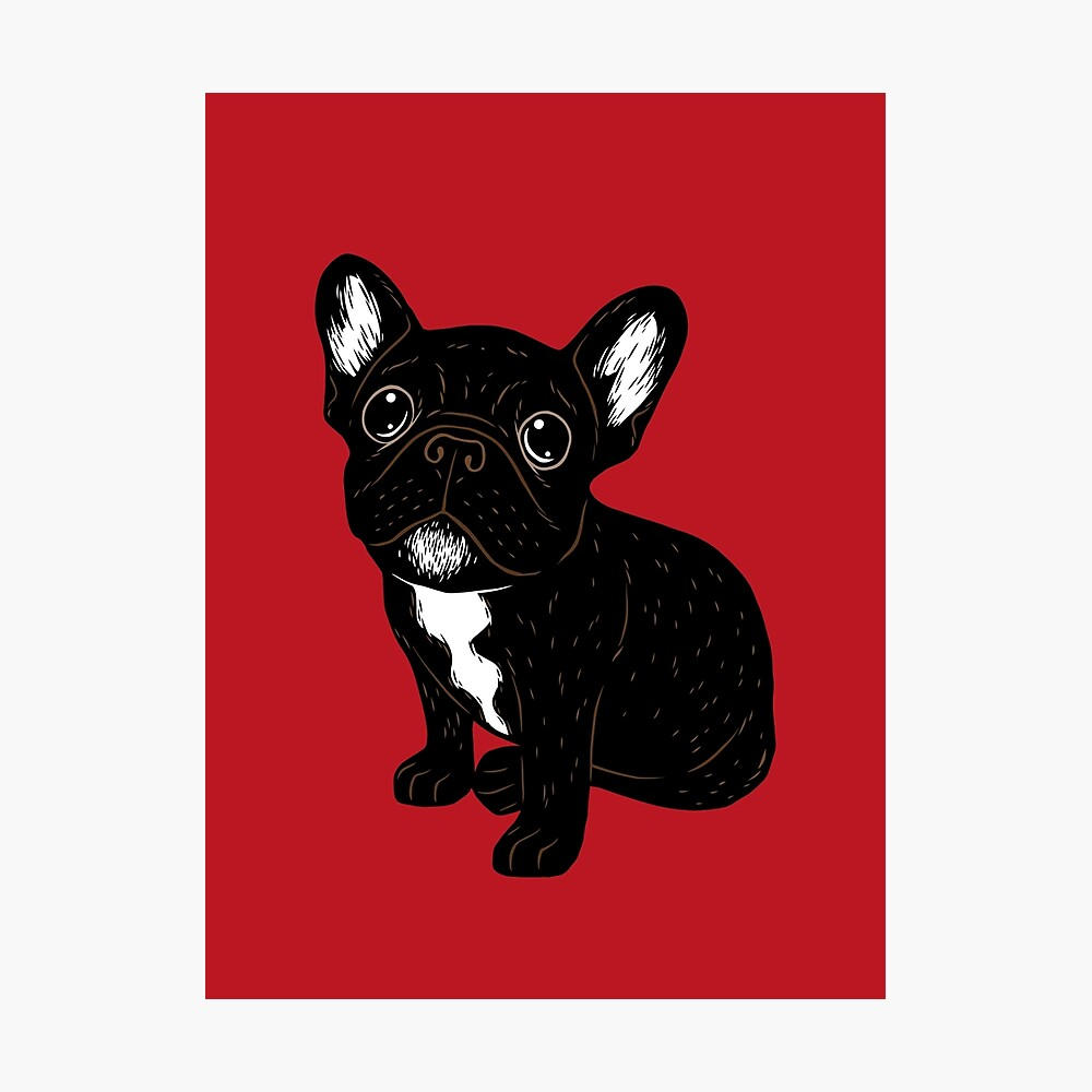 Cute Brindle Frenchie Puppy Photographic Print