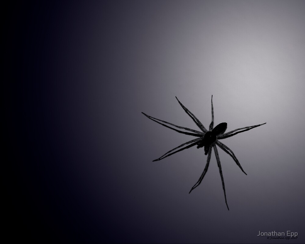 spider by Jonathan Epp
