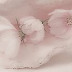 Three Pink Cosmo Flowers by Sandra Foster