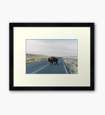 Seldom is Herd Framed Print