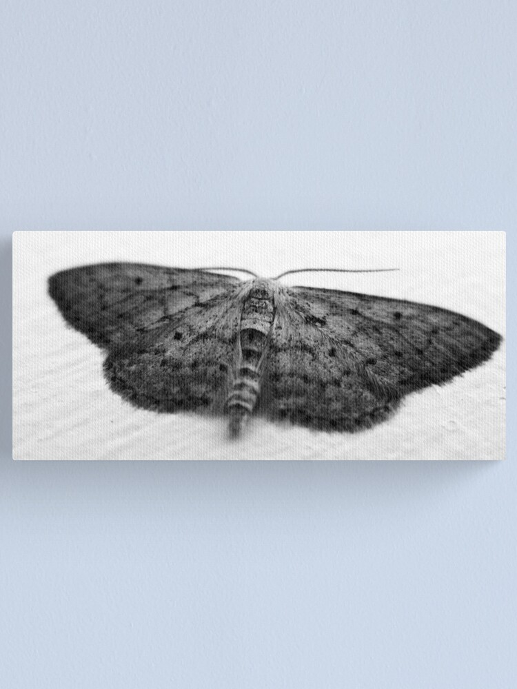 Alternate view of Moth  Canvas Print