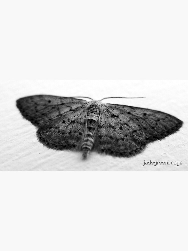 Moth  by jadegreenimage