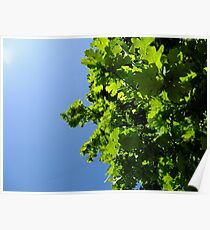Lush Leafy Green Poster