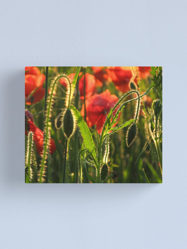 Alternate view of Poppies 5 Canvas Print