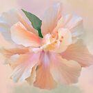 PEACH HIBISCUS by Shirley Kathan-Sayess