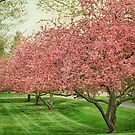 Blossom Time Scenes Around A Small Town by Kathilee