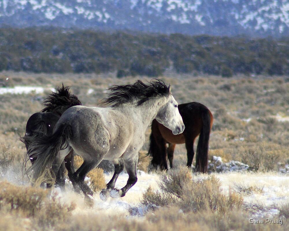 Winter Run by Gene Praag