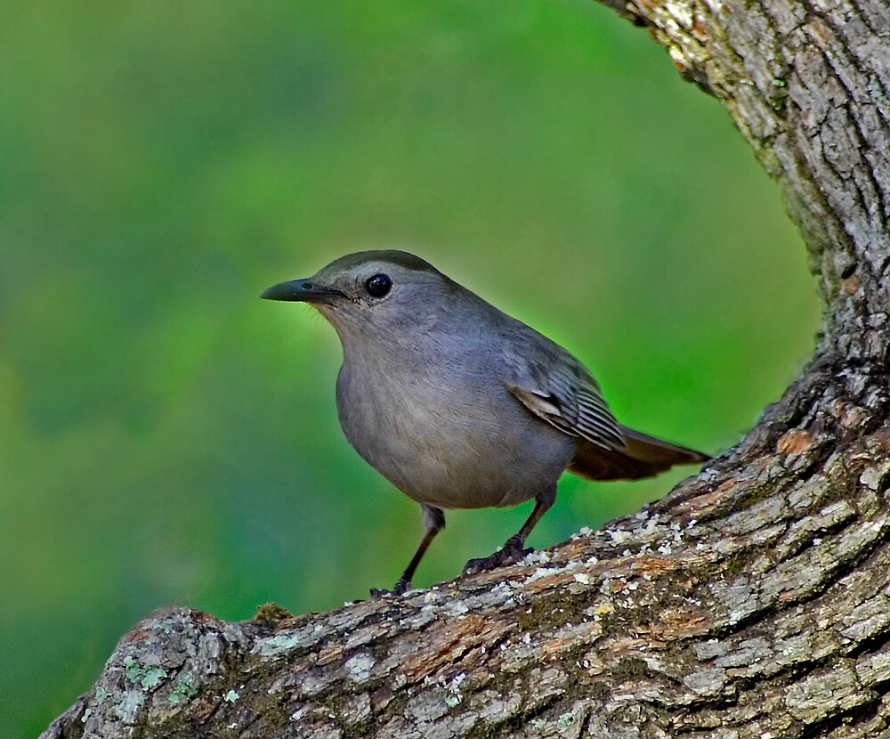 Catbird by Michael Wolf