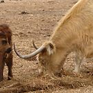 Keep those horns away from me mummy! by georgieboy98