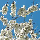 Bloom'n Loverly by MarianBendeth