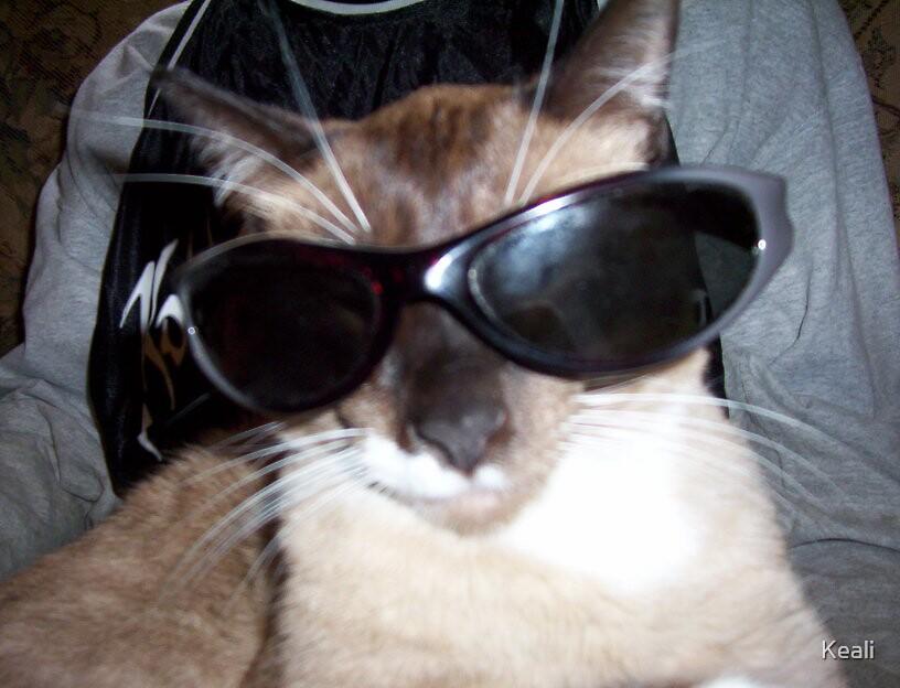 Cool Cat by Keali