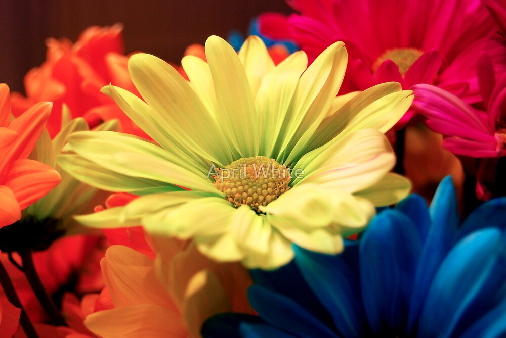 Crazy Daisy Bouquet by April White