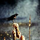 Bird on the Rushes by Lisa Brower