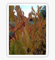 Fall Colours I Sticker